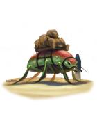 Eric Lofgren Presents: Giant Pack Beetle