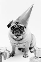 Pug Party (public beta)