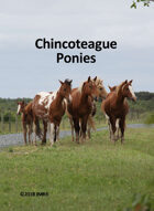 Chincoteague Pony Poker Deck #1