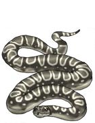 Snake Constrictor