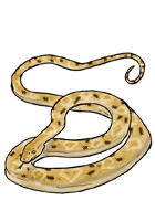 Snake Crushgrip Constrictor