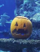 Alluria Publishing Happy Halloween [BUNDLE]