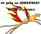 Mi Gato se Incendia! (My Cat is on Fire!)