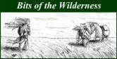 Bits of the Wilderness