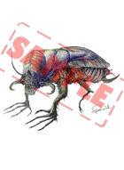 Image- Stock Art- Stock Illustration- Monster insect- Catacombs scavenger