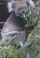 Aussie Critters for Pathfinder