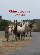 Chincoteague Pony Poker Deck #2
