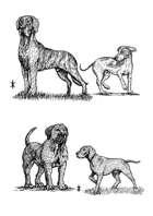 Dogs - Stock Art