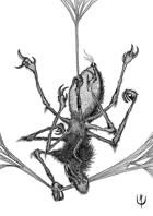 SPIDER LICANTROP - Stock art