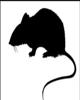 Rats in the Metropolis