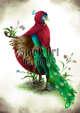 Character Stock Art: Peacock Aarakocra