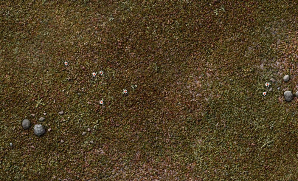 gallery-grassy-plain-battle-mat-01b.jpg