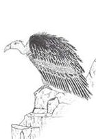 Vulture on Cliffs Stock Art