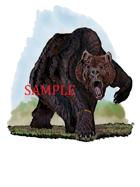 Druid - Bear: Stock Art