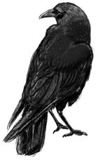 The Raven Warlock Archetype