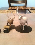 Deer, Elk, and Giant Elk!
